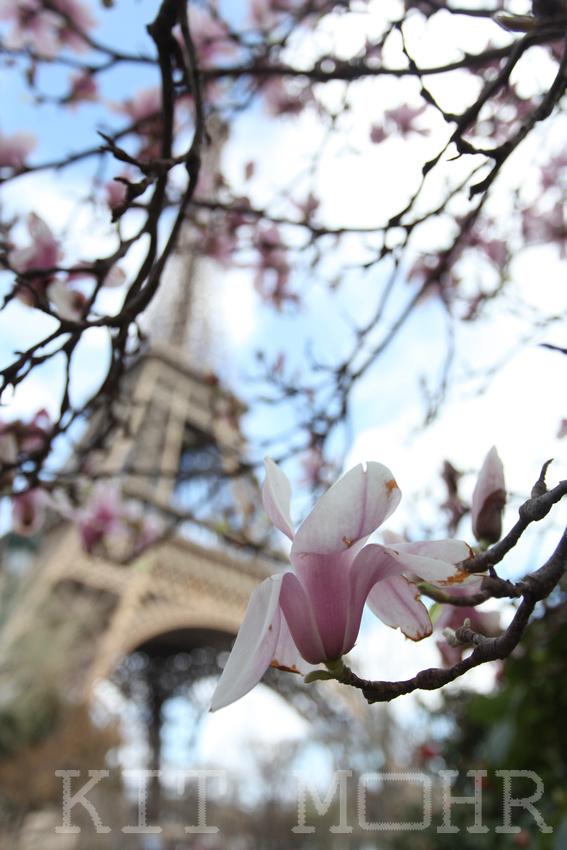 Le_Fleur_Eiffel